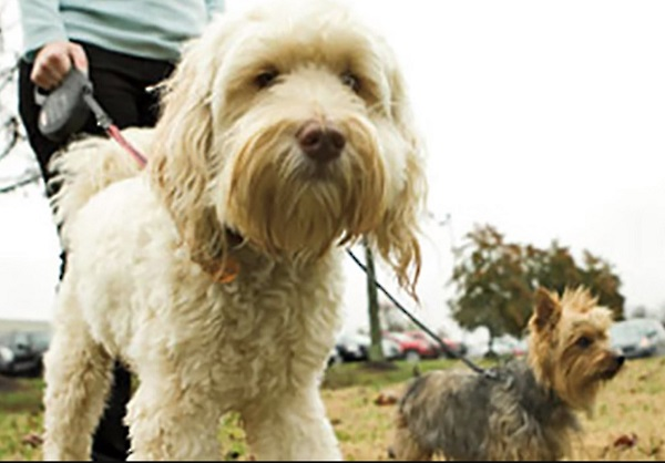Other than being one of the most profitable niches, pet care also has several sub-niches.